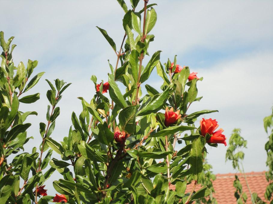 Agriturismo Casa Mia - il giardino